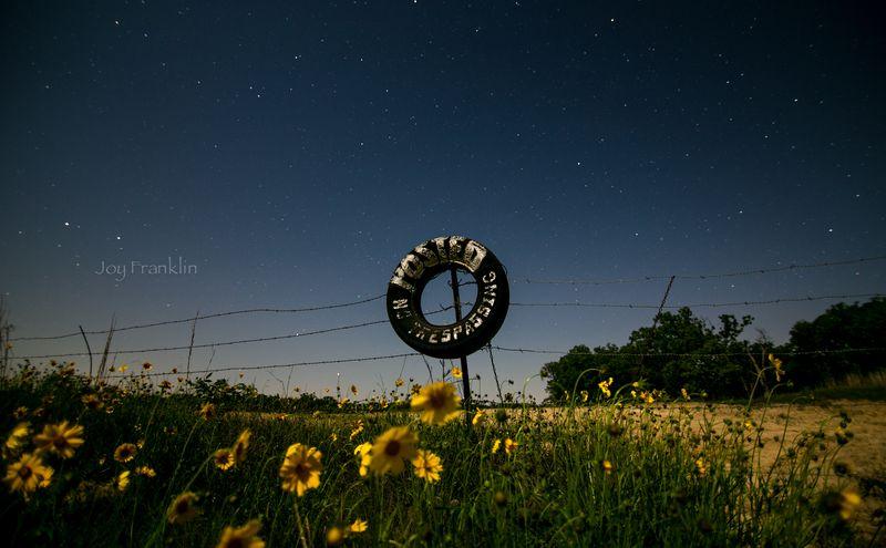 Stars and wildflowers -3320