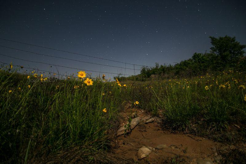 Stars and wildflowers -3338