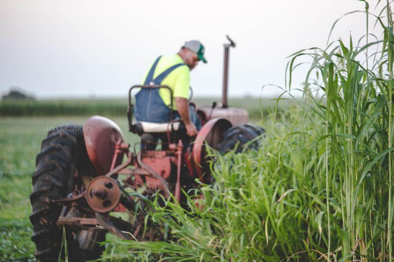 Cutting Hay -2446