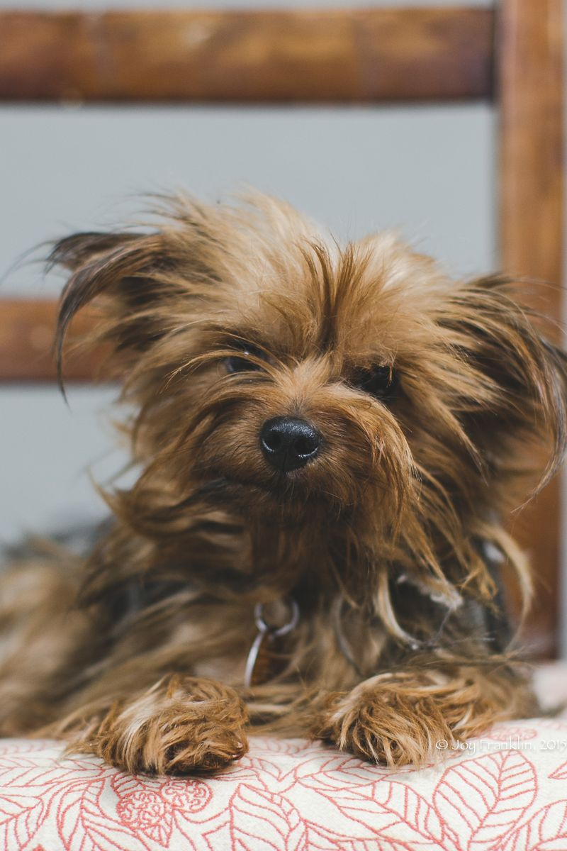 Creepy Doll -1-2