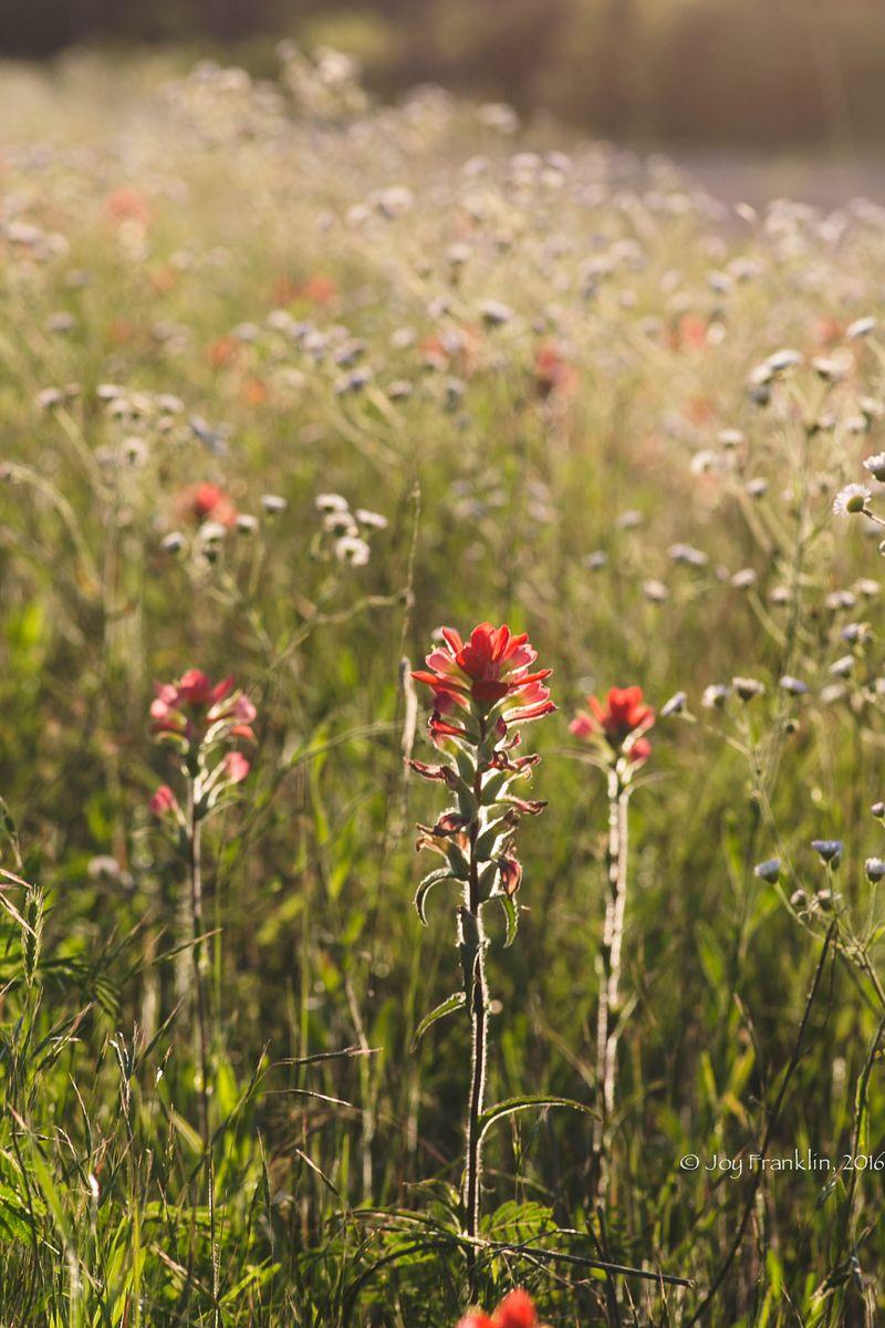 Wildflowers -1-2