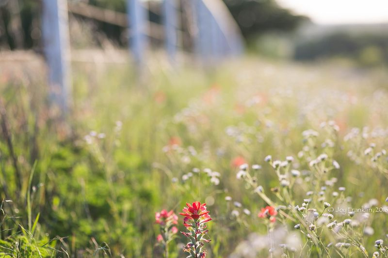 Wildflowers -1-6