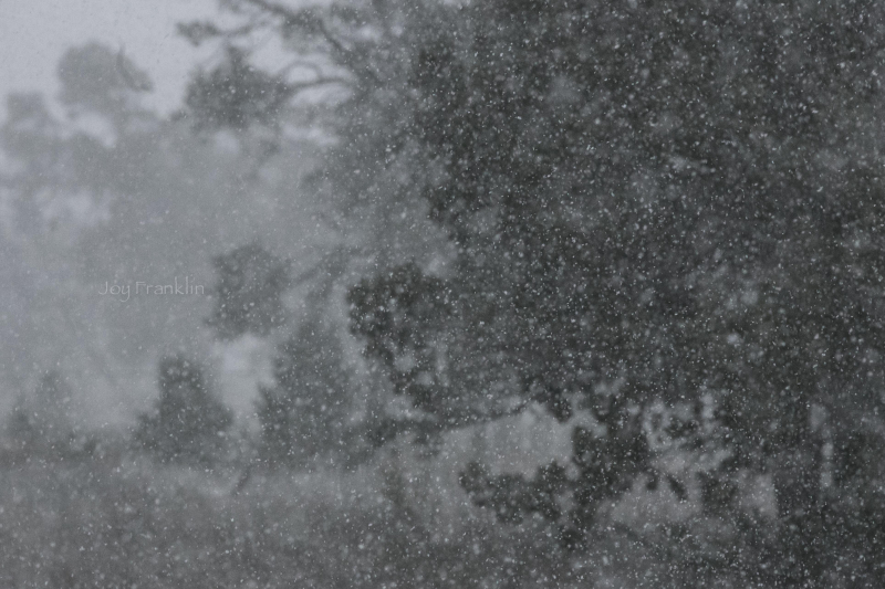November Snow in Pine Hill New Mexico-1-4