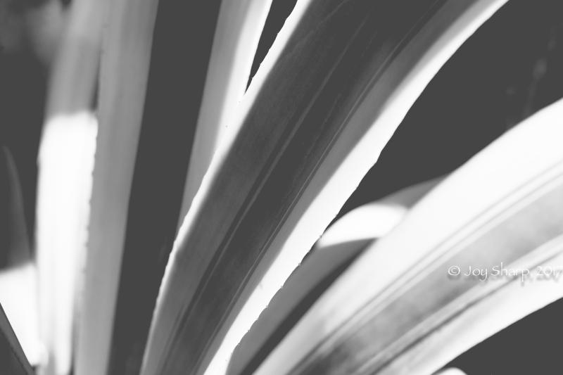 Botanical Gardens -1-12