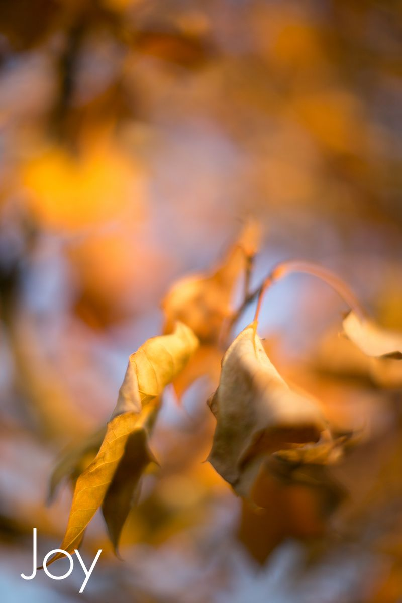 November Leaves -1037