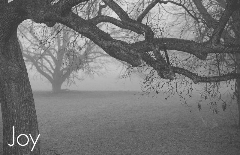 Fog-4123