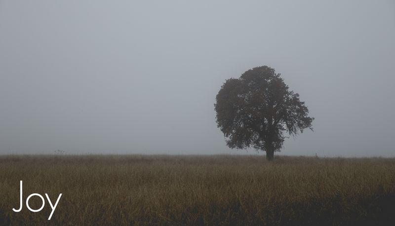 Fog-4333