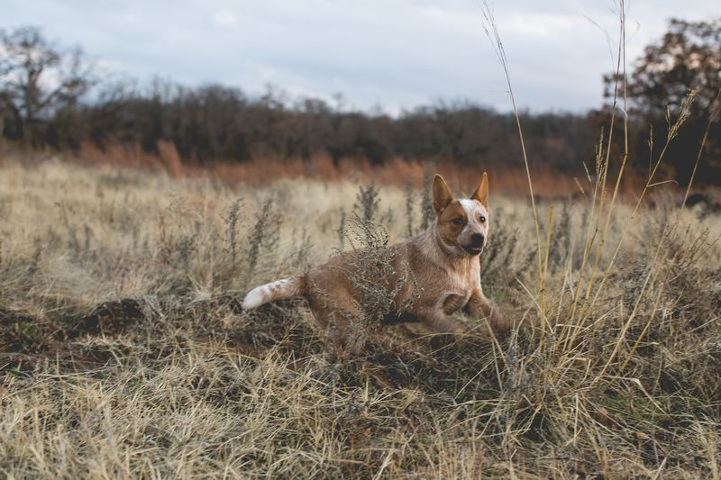 Dogs in the country-7379