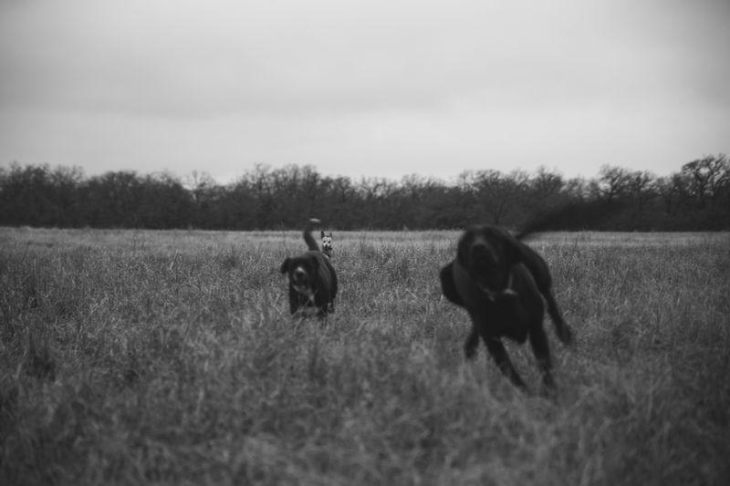Dark December Walk -1-5
