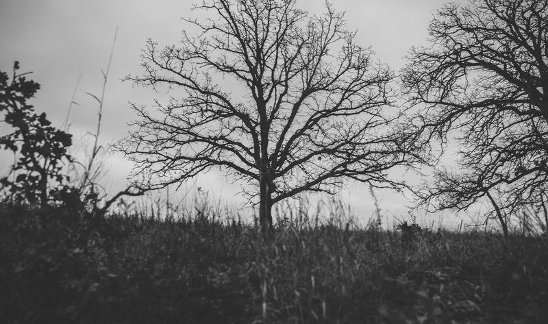 Dark December Walk -1-7