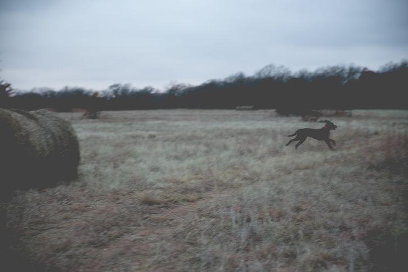 Dark December Walk -1-11