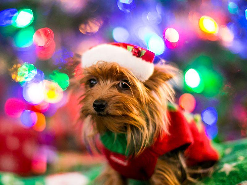 Christmas Eve 2014-1-2