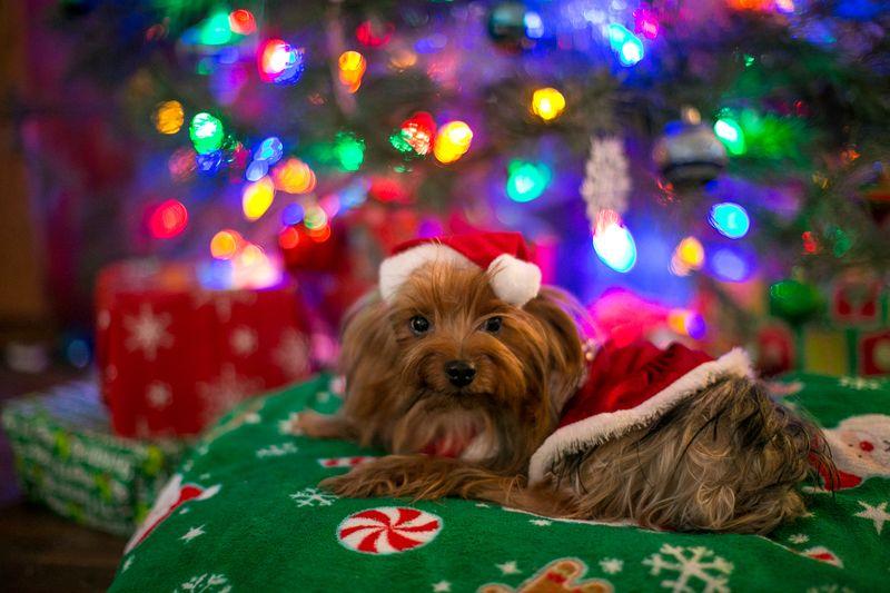 Christmas Eve 2014 -Moki -1