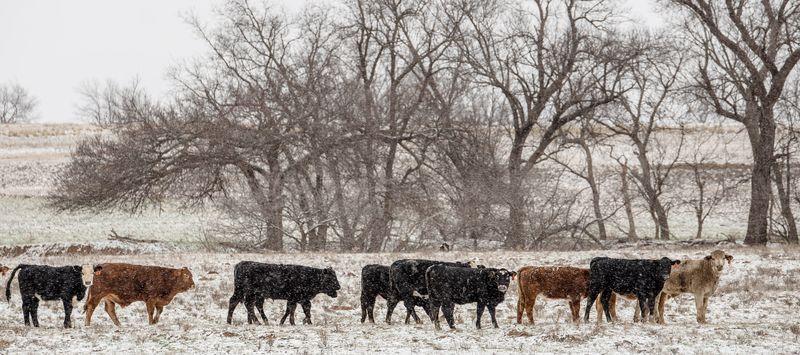 Snowy December 27th -1-3