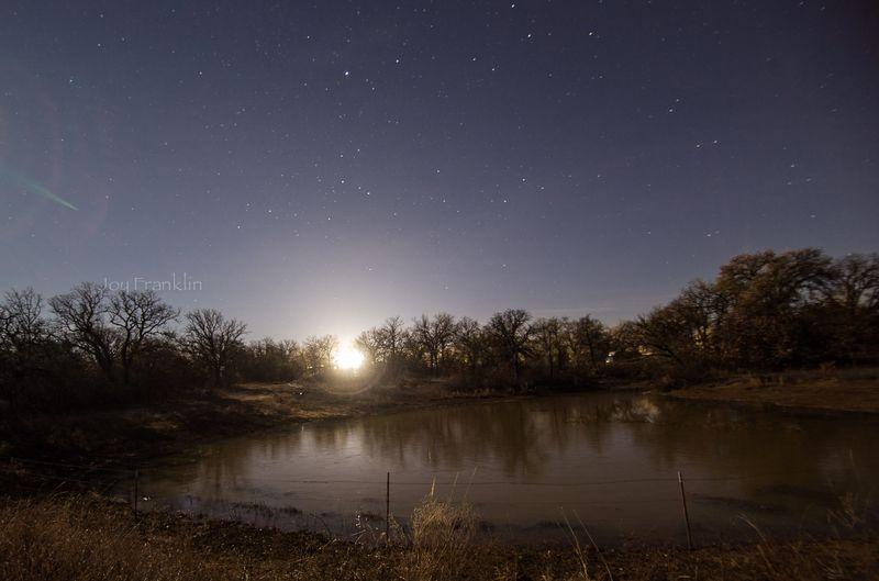 Shooting Stars -Tree by Pond Joy Franklin2015-1-2