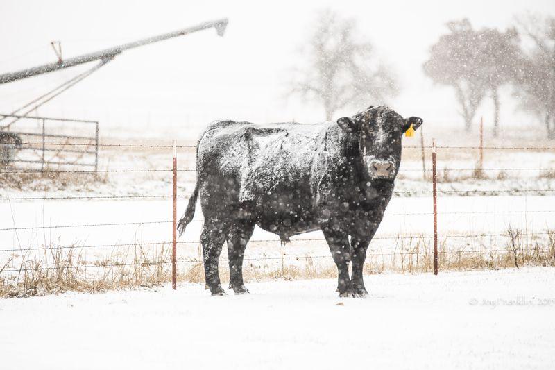 February 27 snow-5864