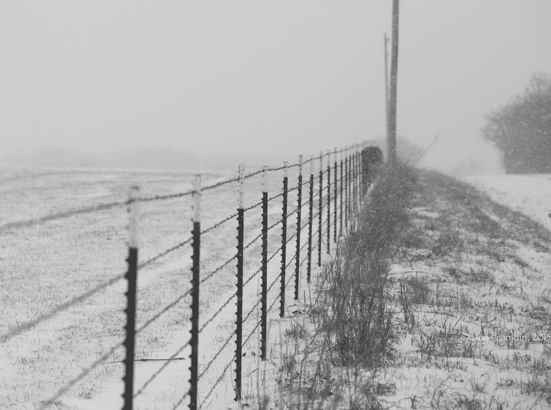 February 27 snow-5865