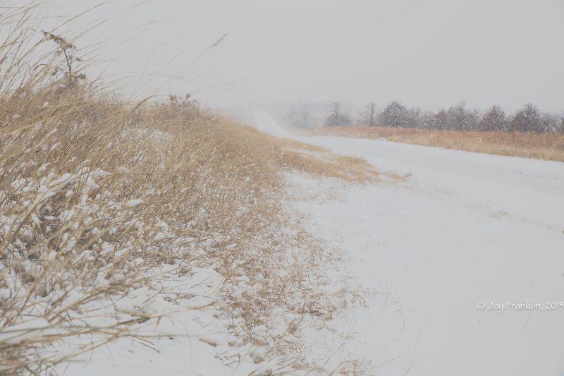 February 27 snow-5927