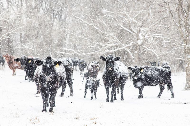February 27 snow-5944