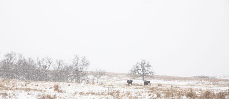 February 27 snow-5952
