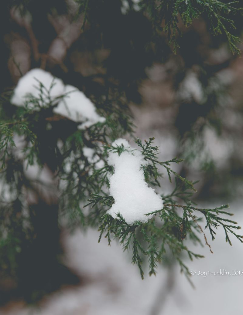 February 28 2015 Snow by Joy Franklin-6108