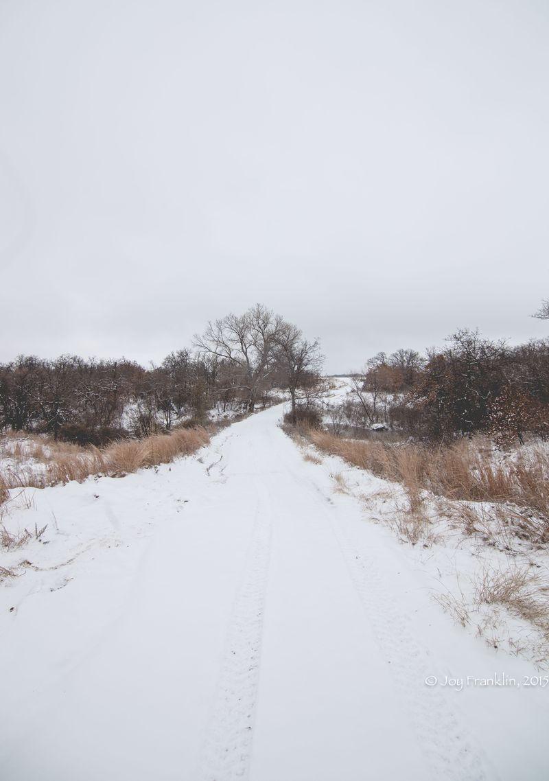 February 28 2015 Snow by Joy Franklin-6166
