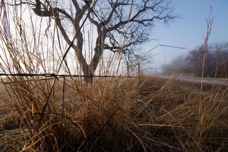 Foggy March Morning-7260