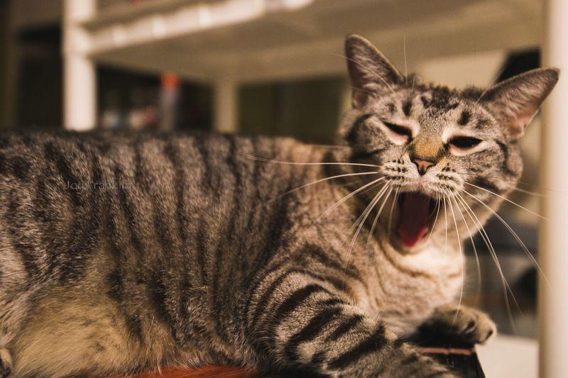 Cubby Yawning -1