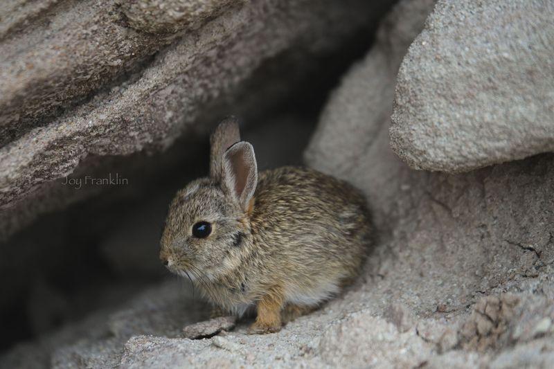 Nebraska_Bunny_Toadstool Geologic Park -1