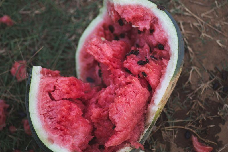 Watermelon -7263