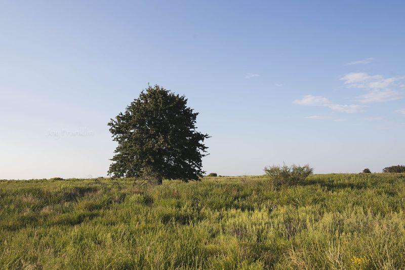 Tree in September-7315