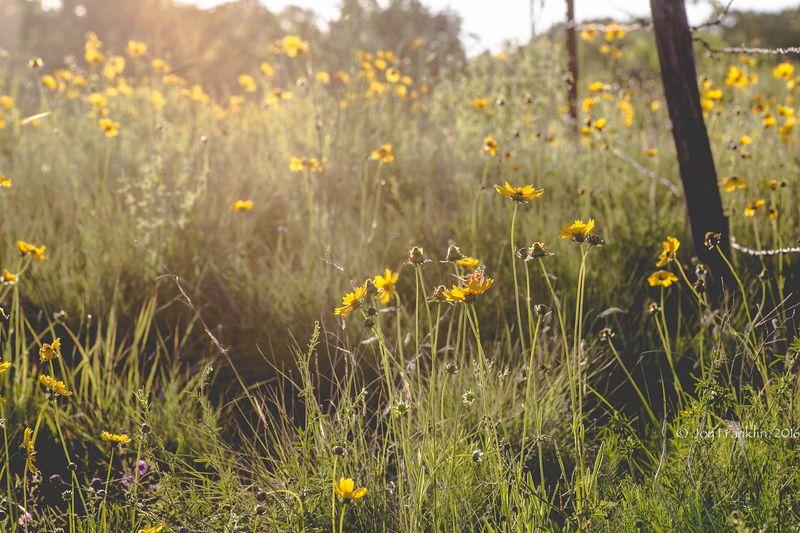 Wildflowers -1-5
