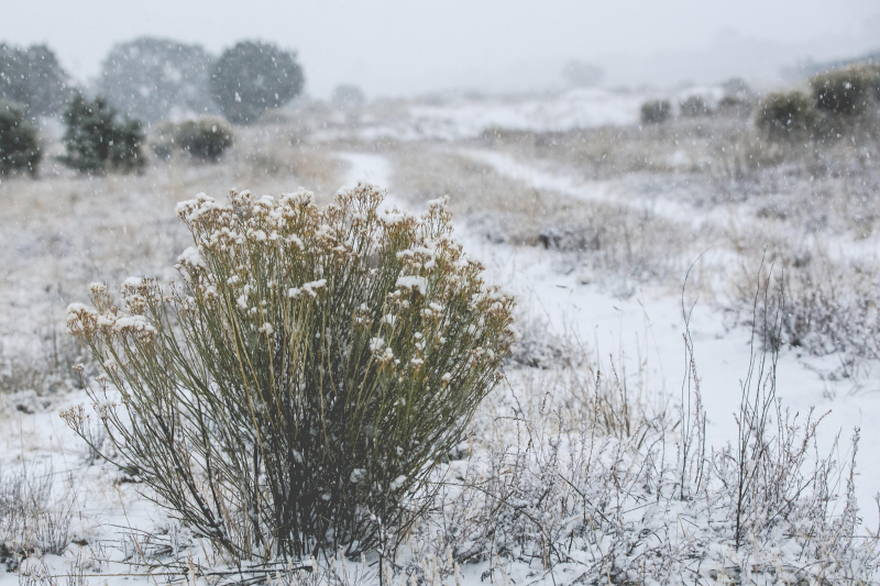 November Snow in Pine Hill New Mexico-1-3