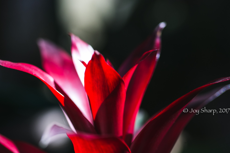 Botanical Gardens -1-10